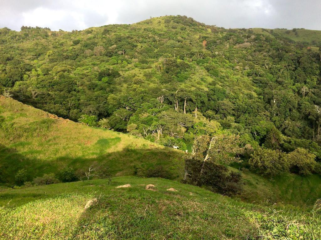 Es war deutlich zu hören, in diesem Wald leben jede Menge Brüllaffen. Vor die Kamera wollte aber keiner.
