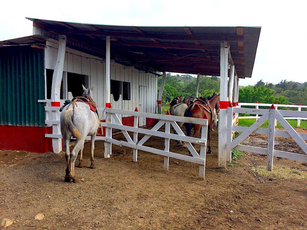 Als wir ankamen, standen unsere Pferde schon bereit.