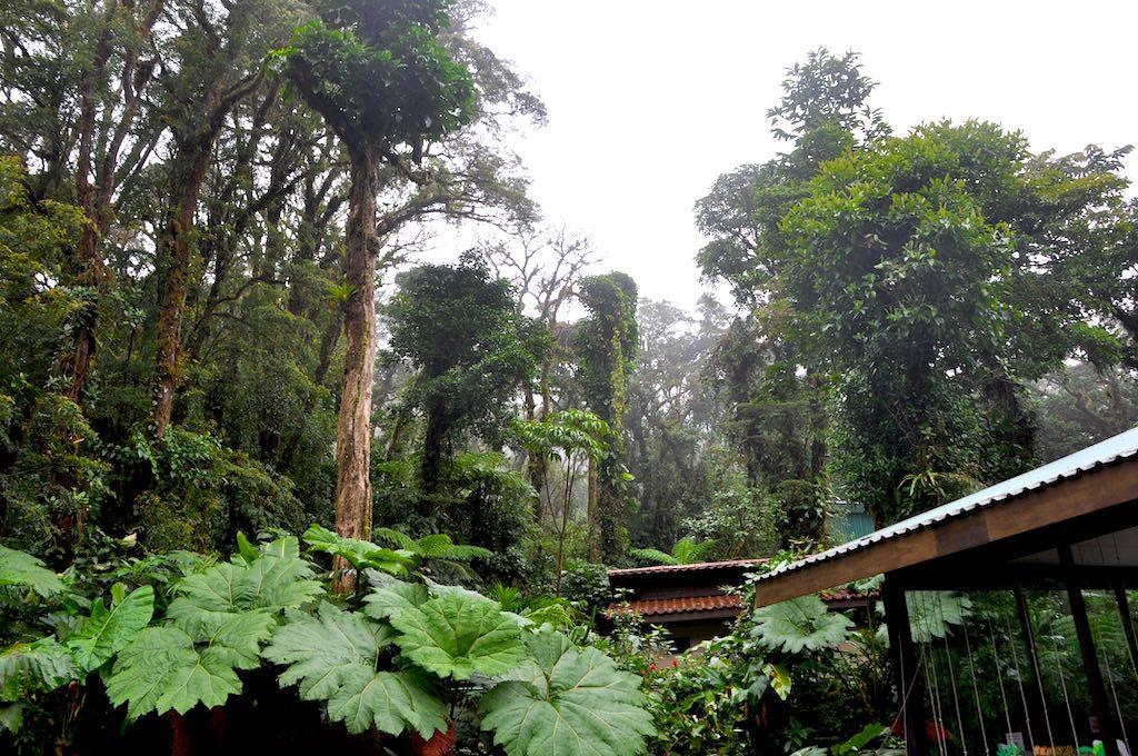 Blick auf den Nebelwald des Nationalparks Santa Elena