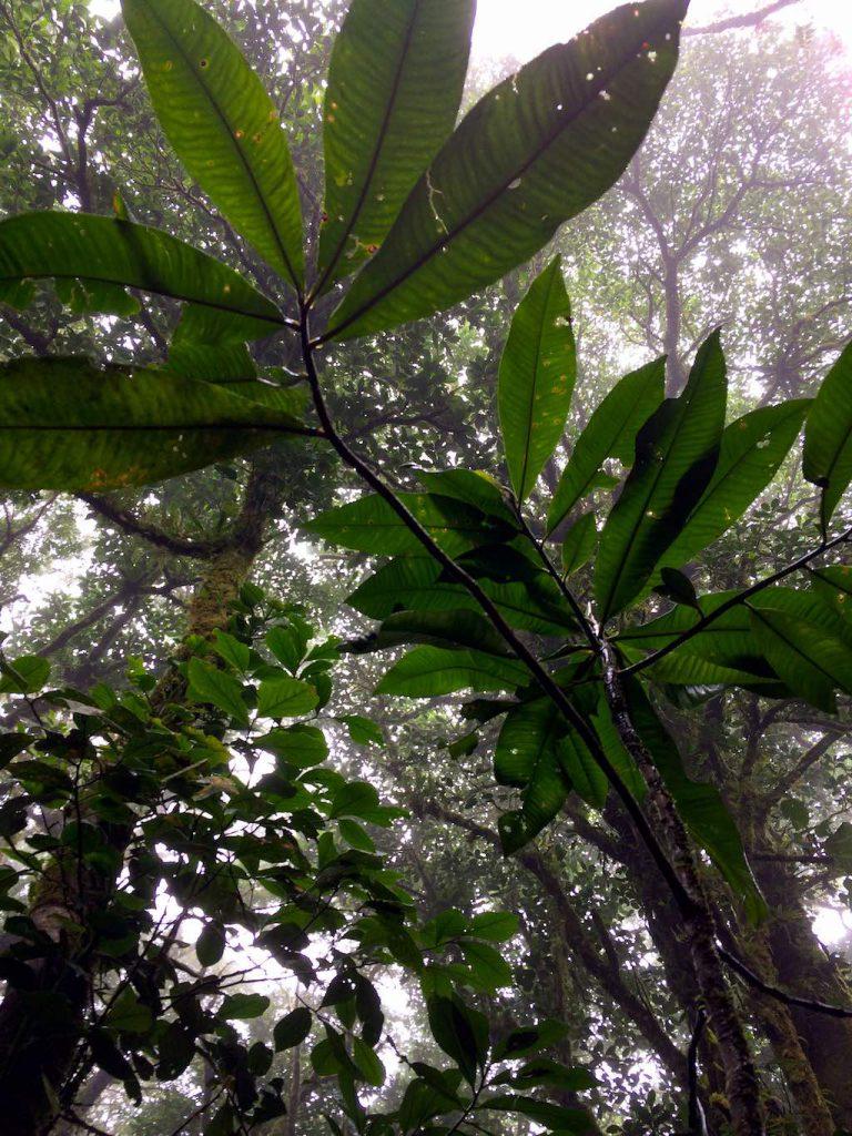 Unter dem Blätterdach - natürlicher Regenschutz