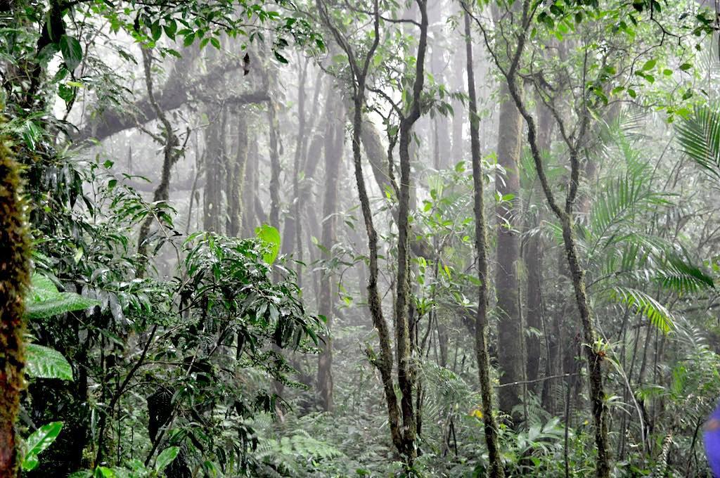 Regen und sehr viel Regen - die zwei Jahreszeiten im Nebelwald.