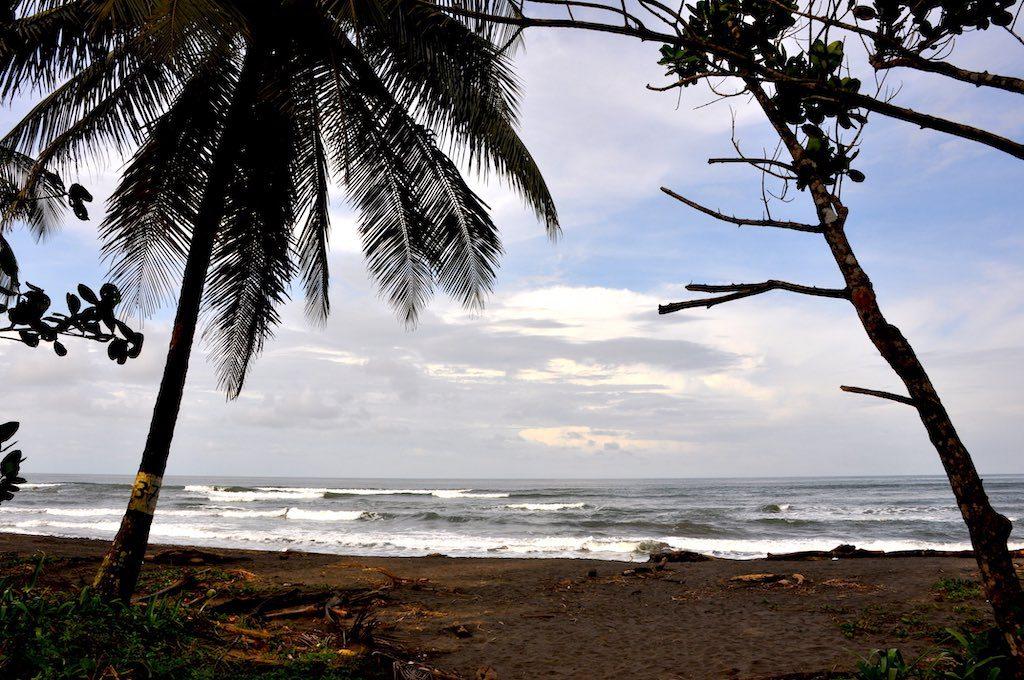 Wunderschöner Karibikstrand, zur Haupt-Schildkrötenzeit aber leider  voller Raubtiere und somit nicht zum Baden geeignet.