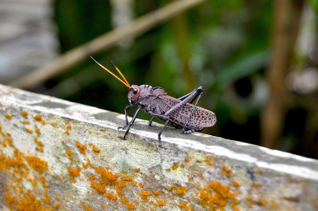 Die Insekten sind hier eine Nummer größer.