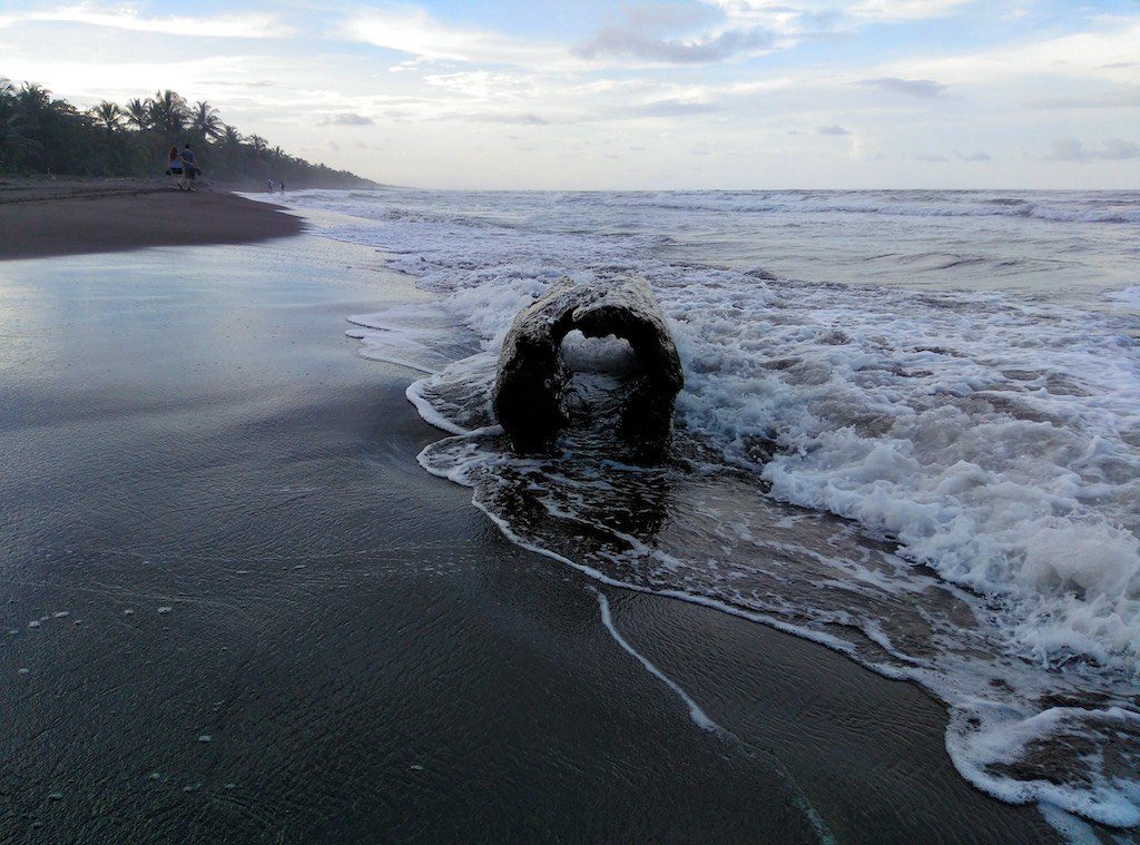 Treibholz am Strand.