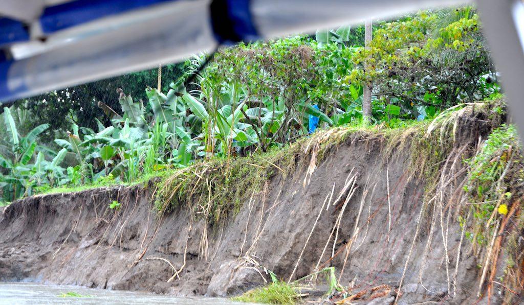 Bananenplantage in Costa Rica. Die Bananen werden mit blauen Planen abgedeckt, um sie vor Schädlingen zu schützen und den Wasserbedarf zu reduzieren.