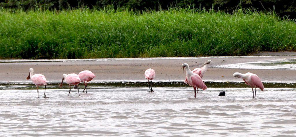 Vorbei an einer Flamingo-Kolonie.