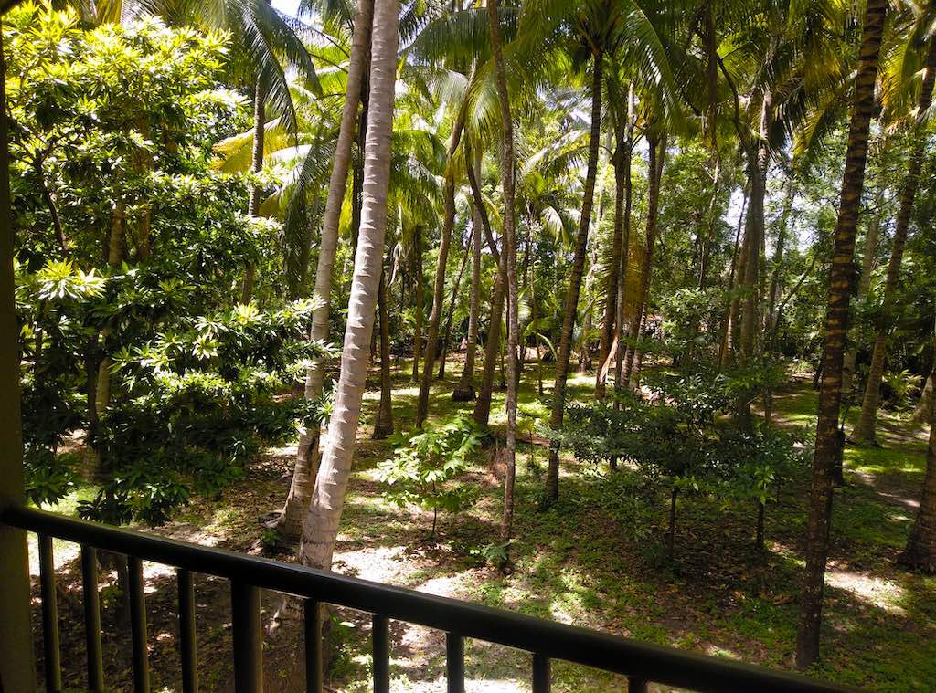 Blick vom Balkon des Baumhauses: Nichts als Urwald...