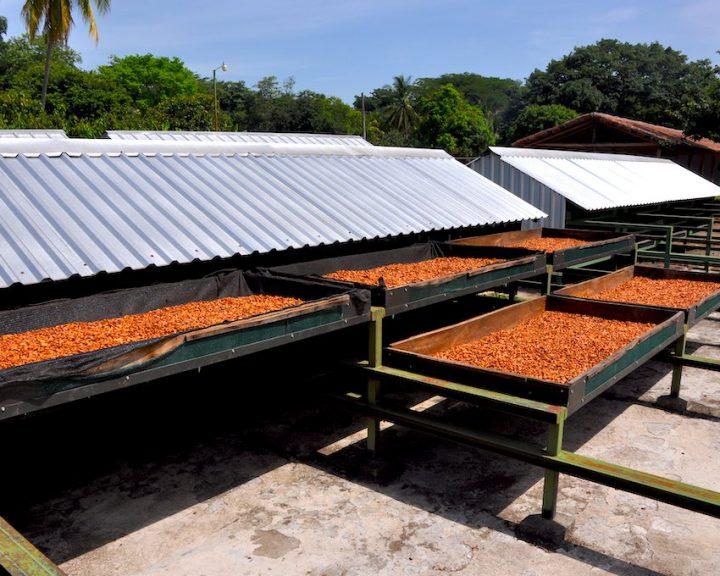 Kakaoplantage in der Bahía de Jiquilisco.