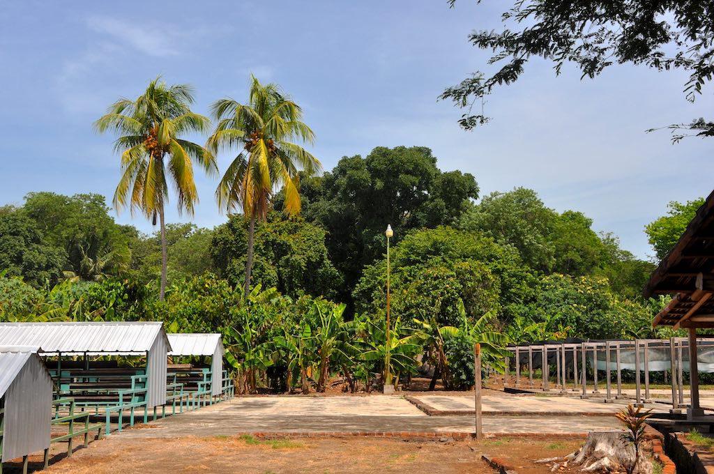 Auf der größten Kakaoplantage Zentralamerikas.
