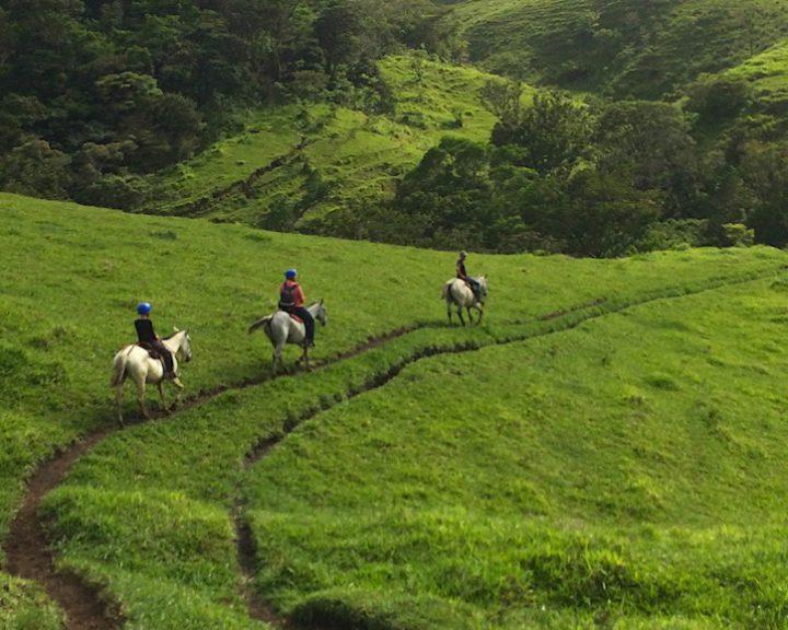 Drei Reiter reiten auf schmalen Pfaden den satt grünen Hügel hinauf.