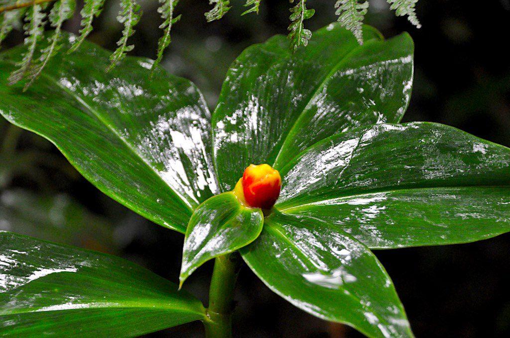 Nicht nur Tiere, sondern auch viele wunderschöne Pflanzen gibt es im Nebelwald zu entdecken.