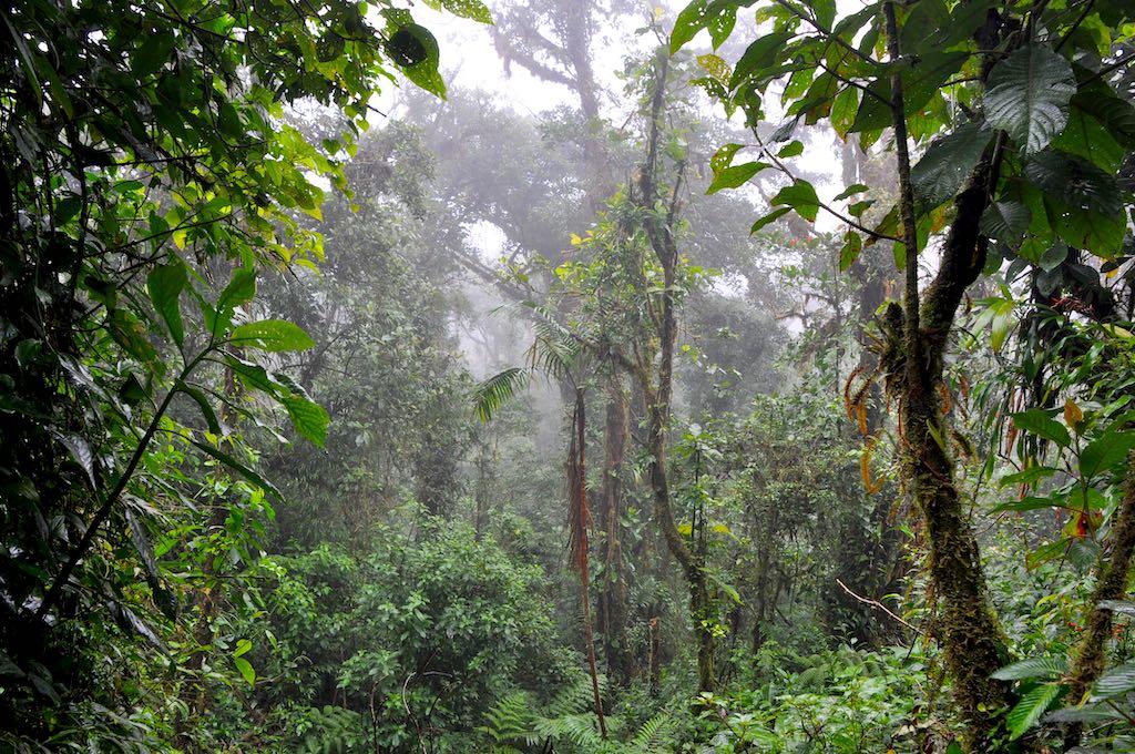Eine kleine Lichtung im Costa Ricanischen Nebelwald, Santa Elena
