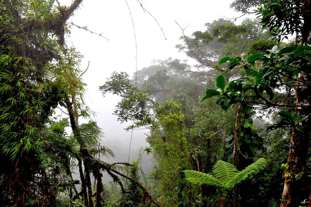 Unterwegs im Nebelwald Santa Elena in Costa Rica